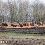 Szczęśliwe krowy