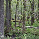 Podmokłe tereny rezerwatu Czarnocin