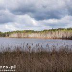 Obumarłe drzewa stojące w kwaśnych wodach pokopalnianych