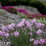 Roślinki na skalniakach