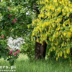 Park Mużakowski – po polskiej stronie park zajmuje powierzchnię około 500 hektarów