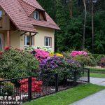 Wracając do Kromlau podziwiamy przydomowe ogródki