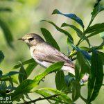 Ostoja Świdwie to ptasi raj – warto zabrać lornetkę