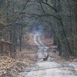 Za Szymankowem w lesie.