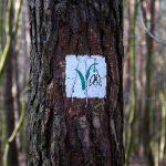 Do rezerwatu prowadzą znaki