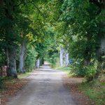 Droga z Silnowa do Piławy
