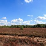 Wrzosowiska – powstałe na terenie byłego poligonu