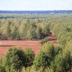 Wrzosowiska zarastają przez samosiejki, głownie brzozy. Miejmy nadzieję, że lasy państwowe, do których należy teren wrzosowisk wywiążą się z obowiązku ochrony tych terenów poprzez usuwanie nalotu drzew i krzewów