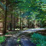 Jadąc przez rozległe kompleksy leśne wspieramy się osmmapą i garminem