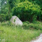 Głaz narzutowy, największe w parku mają po 40t