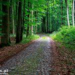 Brukowana droga przez rez. Radęcin