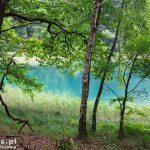 Jezioro Czarne odznacza się bardzo dużą przejrzystością – średnio 7m