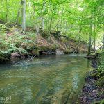 Rzeka Płociczna