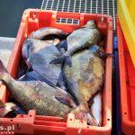 Ryby prosto z kutra