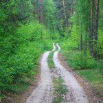 Droga wzdłuż j. Straduń