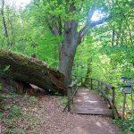 Ścieżka przyrodnicza Nad Bukówką