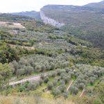 Zbocza gór porośnięte lasem lub gajami oliwnymi