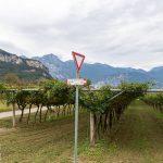 Droga przez winnice