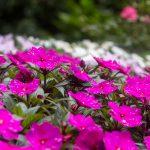 Mikroklimat sprzyja szerokiej gamie roślinności sprowadzonej z różnych części świata.
