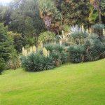 Juki w arboretum w Arco