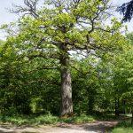 W okolicy leśniczówki Dębina