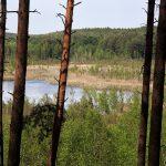 Rezerwat Torfowisko Linkowo – widok z wieży