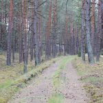 Leśna droga wzdłuż linii kolejowej