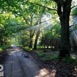 Puszcza Zielonka - refleksy świetlne