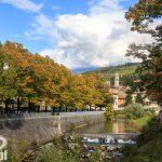 Drzewa okrywają się jesiennymi kolorami – cóż to już pierwsza połowa października